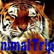 Перевозка животных Animal Trips group on My World