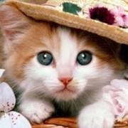 Кошка Ю on My World.